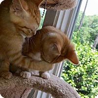 Adopt A Pet :: Nala - Dawson, GA