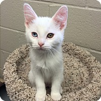 Adopt A Pet :: Venus - San Leon, TX