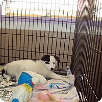 Adopt A Pet :: Shelby - Jamestown, TN