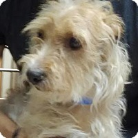 Adopt A Pet :: Nachos - Lakeland, FL