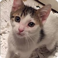 Adopt A Pet :: Riley - Novato, CA