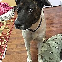 Adopt A Pet :: Sarah - Harrisville, RI