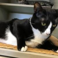 Adopt A Pet :: TUX - St. Thomas, VI