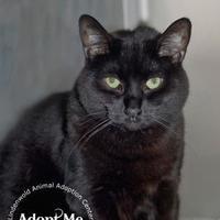 Adopt A Pet :: Lulu - Lindenwold, NJ