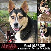 Adopt A Pet :: Margie - Pottstown, PA