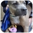 Photo 3 - American Pit Bull Terrier Dog for adoption in Los Angeles, California - China