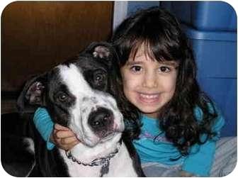 Pointer/Terrier (Unknown Type, Medium) Mix Dog for adoption in Raritan, New Jersey - Lucy