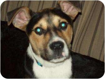 Terrier (Unknown Type, Medium) Mix Puppy for adoption in Alliance, Nebraska - Robbie