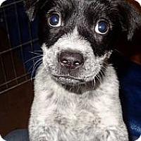 Adopt A Pet :: Jackson - Westbank, BC