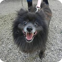 Adopt A Pet :: Polly ADOPTED!! - Antioch, IL