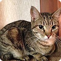 Adopt A Pet :: Jinxy - Pace, FL