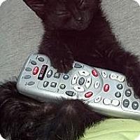 Adopt A Pet :: Liberty (plays fetch0 - Sterling Hgts, MI