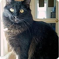 Adopt A Pet :: Cleo - Medway, MA