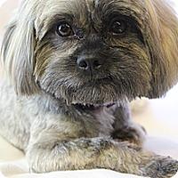 Adopt A Pet :: Jasper - Wytheville, VA