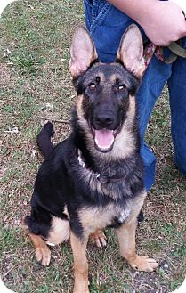 German Shepherd Dog Mix Dog for adoption in Iowa, Illinois and Wisconsin, Iowa - Gabby