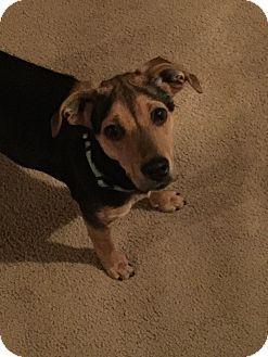 Shepherd (Unknown Type) Mix Dog for adoption in Prior Lake, Minnesota - Hanna