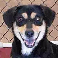Adopt A Pet :: Princess Leia - Rossville, TN