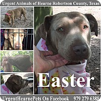 Adopt A Pet :: Easter - Hearne, TX