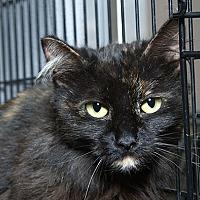 Adopt A Pet :: Sabrina L - Sacramento, CA