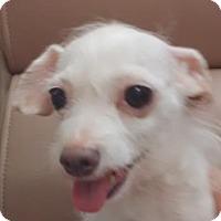 Adopt A Pet :: Sandra Bullock - Lakeland, FL