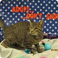 Adopt A Pet :: A081024 - Grovetown, GA