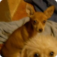 Adopt A Pet :: Charles - dewey, AZ