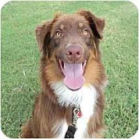 Adopt A Pet :: Sawyer - Phoenix, AZ