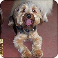 Adopt A Pet :: Happy - Dartmouth, MA