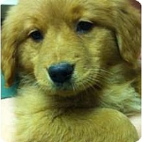 Adopt A Pet :: Windi - Windham, NH