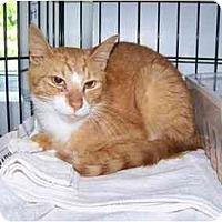 Adopt A Pet :: Mack - Syracuse, NY