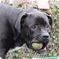 Adopt A Pet :: Rocky - Port Washington, NY
