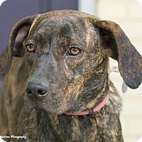 Adopt A Pet :: Gracie - Marietta, GA