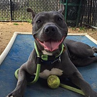 Adopt A Pet :: Frankie G - Manhattan, NY