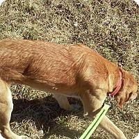 Adopt A Pet :: Faramir - Andrew, IA
