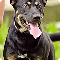 Adopt A Pet :: Nora - SOUTHINGTON, CT