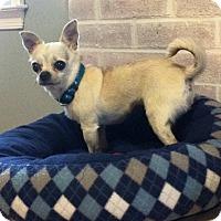 Adopt A Pet :: Pebbles - Durham, NC