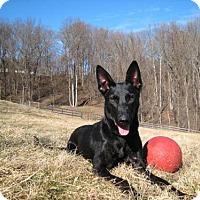 Adopt A Pet :: Heidi - Alexandria, VA