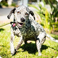 Adopt A Pet :: Speckles/Pepper - Claremont - Chino Hills, CA