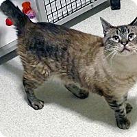 Adopt A Pet :: Lynx - Victor, NY