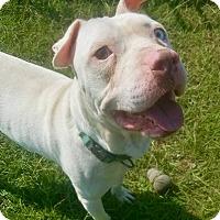Adopt A Pet :: Kasper - CRANSTON, RI