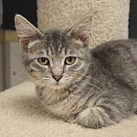 Adopt A Pet :: Ian - Naperville, IL