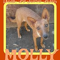 Adopt A Pet :: MOLLY - Sebec, ME