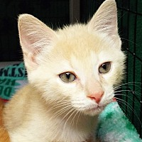 Adopt A Pet :: Shelly - Grants Pass, OR