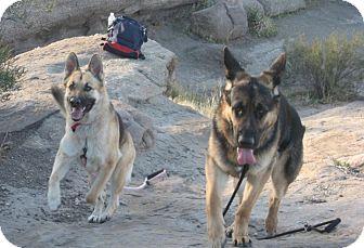German Shepherd Dog Dog for adoption in Studio City, California - Max