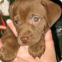 Adopt A Pet :: Leoni - Albany, NY