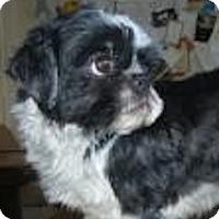 Adopt A Pet :: Zip - Antioch, IL