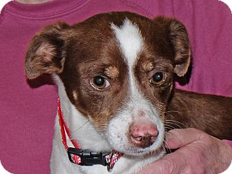 Terrier (Unknown Type, Small) Mix Dog for adoption in Spokane, Washington - Rich