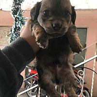 Adopt A Pet :: Milo - Long Beach, CA