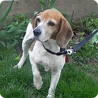 Adopt A Pet :: June - Toronto, ON