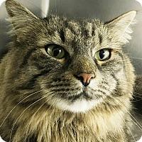 Adopt A Pet :: Honey - Clayville, RI